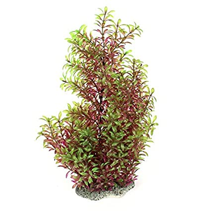 Amazon.com : eDealMax Planta Verde de plástico Fucsia de Underwater Decoración 15, 7 por Fish Tank : Pet Supplies