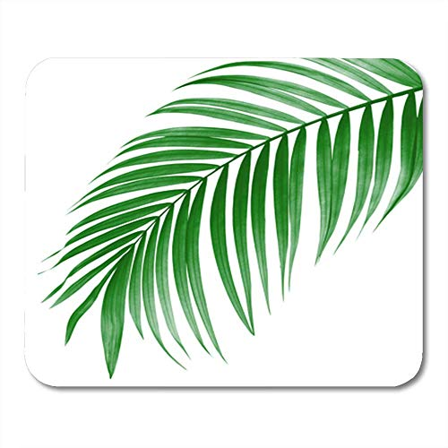 Gaming Mouse Pad Tropical Green Leaf of Palm Tree on White Plant Foliage Frond Arch Bend Betel Botany 7.18.7 Inches Decor Office Computer Accessories Nonslip Rubber Backing Mousepad Mouse Mat