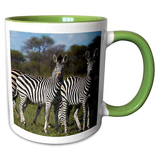 (3dRose Danita Delimont - David Wall - Zebra - Burchells zebra, Equus quagga, Nxai Pan NP, Botswana, Africa - 15oz Two-Tone Green Mug (mug_188062_12))