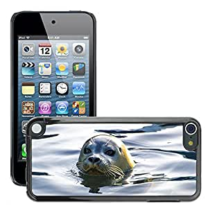Super Stella Slim PC Hard Case Cover Skin Armor Shell Protection // M00145451 Seal Grey Animal North-Sea // Apple ipod Touch 5 5G 5th