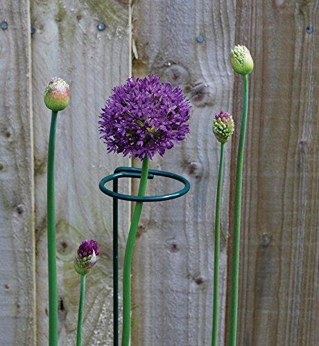 Mr.Garden Round Vegetables Stalk Plant Climbing Support Trellis Flower Vine  Support Garden Trellis 23.6