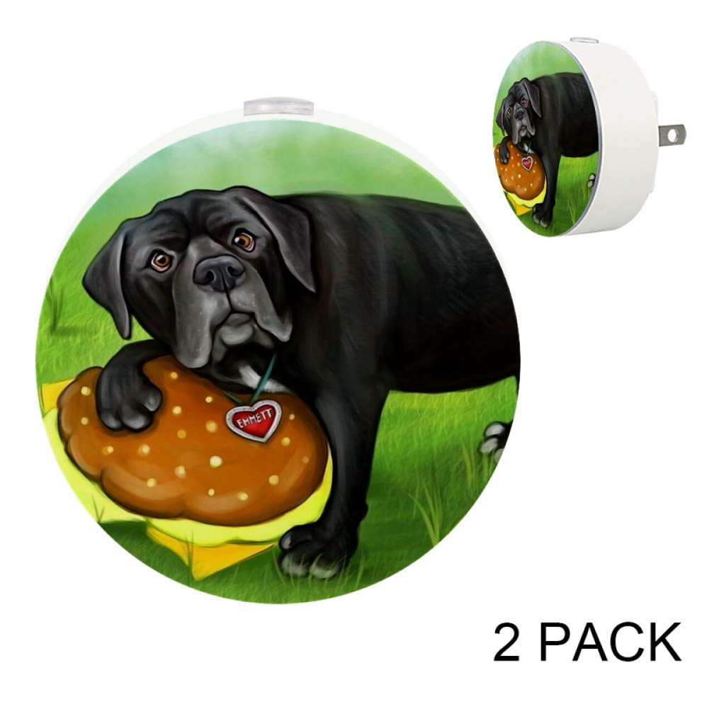 Amazon.com: LED Night Light with Black Dog Hamburg Night ...