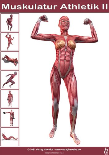 Stretching Anatomie Guide Dehnprogramm Flexible Muskeln Poster ...