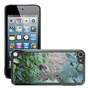 Etui Housse Coque de Protection Cover Rigide pour // M00134557 Erizo Animal Forest Europe // Apple ipod Touch 5 5G 5th