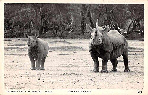 Rhinoceros Photo - 5