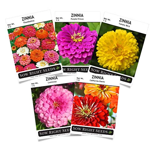 - Sow Right Seeds - Zinnia Flower Seeds Collection - Five Packets - Luminosa, Canary Bird, Purple Prince, California Giants, and Thumbelina; Full Instructions for Planting, Wonderful Gardening Gifts
