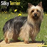 Silky Terrier Calendar - Breed Specific Silky Terrier Calendar - 2016 Wall calendars - Dog Calendars - Monthly Wall Calendar by Avonside
