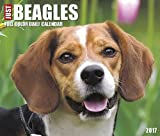 Best Value Just Beagles Daily Desktop Box Calendar Dogs 2017 {jg} Great Holiday Gift Ideas - for mom, dad, sister, brother, grandparents, gay, lgbtq, grandchildren, grandma.