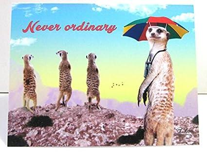 Amazon Never Ordinary Funny Meerkat With Umbrella Hat