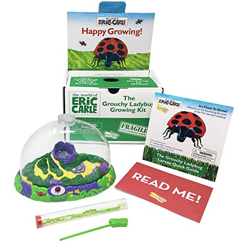 Eric Carle Ladybug - Insect Lore the World of Eric Carle Grouchy Ladybug Growing Kit, Green