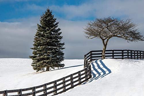 フェンスの壁紙で分割された木-自然の壁紙-#38346 - キャンバス ステッカー 印刷 壁紙ポスター はがせるシール式 写真 特大 絵画 壁飾り 90cmx60cm
