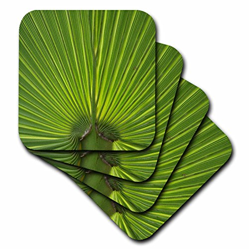[Danita Delimont - Leaves - Palm Tree Frond - set of 4 Coasters - Soft (cst_228205_1)] (Palm Frond Placemat)