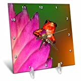 3dRose Danita Delimont - Frogs - South America, Panama. Strawberry poison dart frog on bromeliad flower - 6x6 Desk Clock (dc_278320_1)