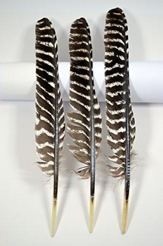 3 Stück Schreibfedern Naturfedern Truthahn Spitzposen (ungeschnitten)