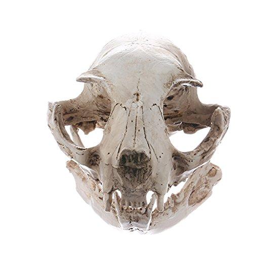 Realistic Resin Cat Skeleton Animal Skull Replica Aquarium Landscape Decor