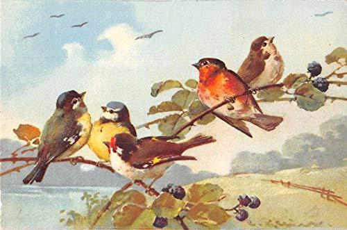 Birds Sitting on Branch Blueberries Artist Signed Klein Antique Postcard J80447
