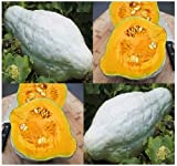 1 oz (170+ Seeds) BLUE HUBBARD Squash seeds WINTER ~Light blue-grey in color sweet fine texture