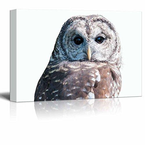 wall26 - Canvas Wall Art - an Owl - Giclee Print Gallery Wrap Modern Home Decor Ready to Hang - 12