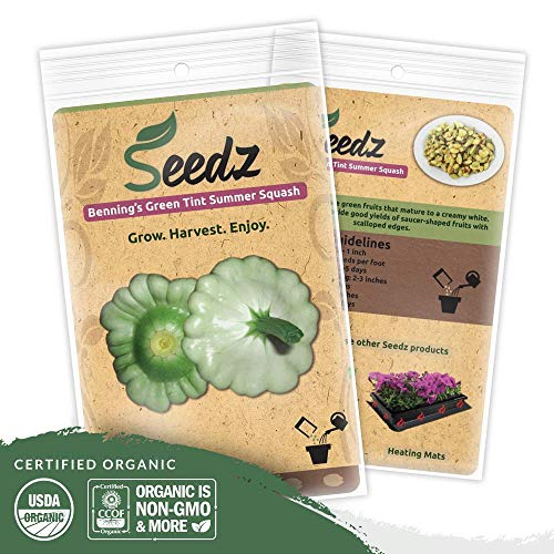 Organic Squash Seeds (APPR. 75) Benning's GT Summer Squash - Heirloom Vegetable Seeds - Certified Organic, Non-GMO, Non Hybrid - USA