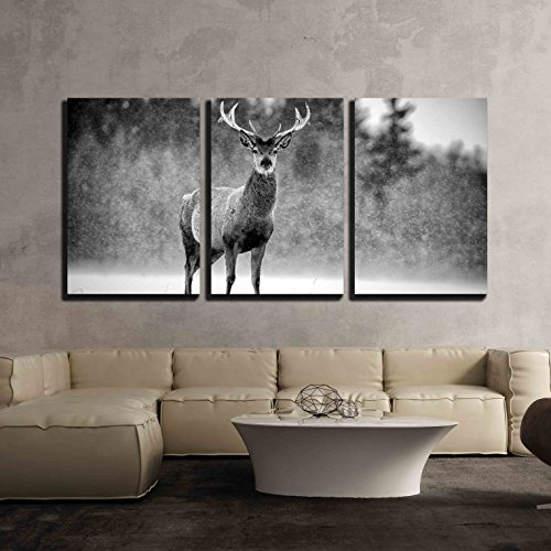 "Wall26 - 3 Piece Canvas Wall Art - Red Deer Stag Cervus Elaphus in the Scottish Winter Snow Black White Image - Modern Home Decor Stretched and Framed Ready to Hang - 16""x24\""x3 Panels"