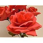 Phoenix-Silk-2-Bushes-Open-Rose-5-Artificial-Silk-Flowers-14-Bouquet-1171-CORAL