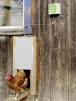 Cajou - Puerta automática para gallinero con corredera y guías: Amazon.es: Productos para mascotas