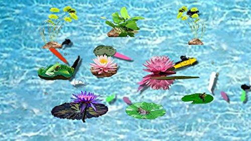 Live Fish Pond Screensaver [Download]