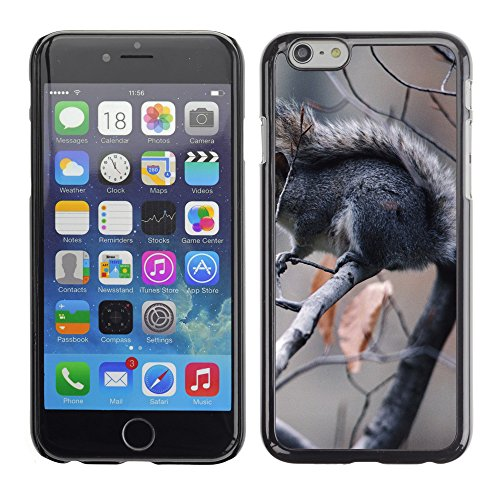 Premio Sottile Slim Cassa Custodia Case Cover Shell // V00003876 écureuil dans l'arbre // Apple iPhone 6 6S 6G 4.7""