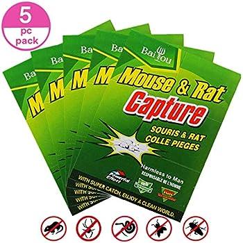 Amazon Com Emuya 5pack Mouse Trap Mouse Glue Trap Rat