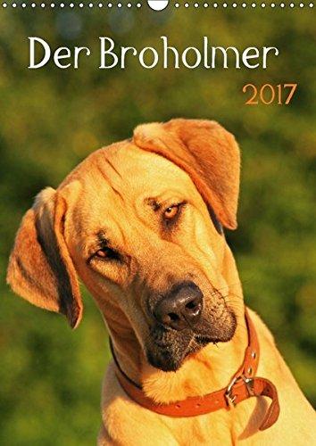der-broholmer-wandkalender-2017-din-a3-hoch-kalender-fr-fans-dieser-beeindruckenden-hunderasse-monatskalender-14-seiten-calvendo-tiere