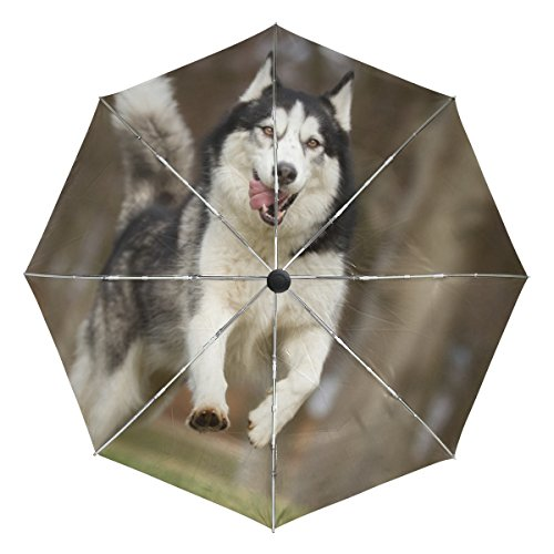 La Random Purebred Siberian Husky Dog Custom Windproof UV Proof Automatic Umbrella Foldable Compact Travel Umbrella