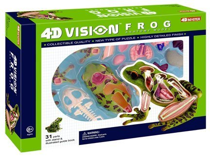 frog model - 6