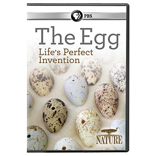 Nature Dvd - NATURE: The Egg: Life's Perfect Invention DVD
