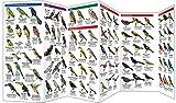Yucatan Birds: A Folding Pocket Guide to Familiar