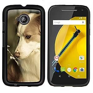 Border collie Corgi mascotas verano perro Naturaleza- Metal de aluminio y de plástico duro Caja del teléfono - Negro - Motorola Moto E2 / E(2nd gen)