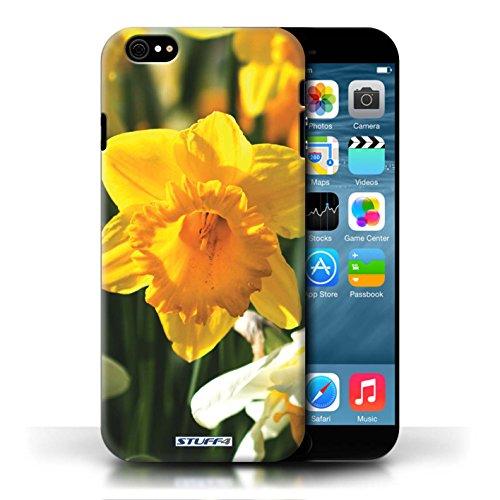 Etui / Coque pour Apple iPhone 6/6S / jonquille conception / Collection de floral Fleurs