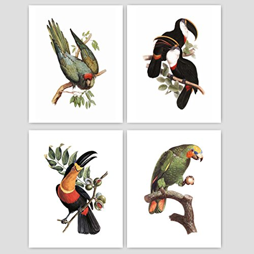 (Set of 4) Bird Art Prints, Victorian Wall Decor, Antique Home, Toucan Parrot Artwork 19th Century Artists - Unframed