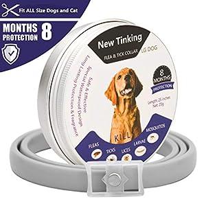 LAOYE Collar de pulgas – 8 Meses de protección el Collar de Perro con Longitud Ajustable para Todas Las Edades de Perros el Collar antipulgas de Perro el Collar antiparasitos Perro pequeño
