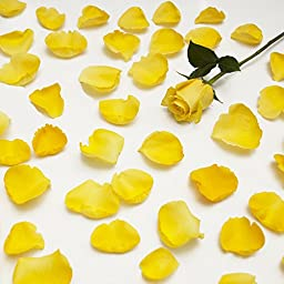 Farm Fresh Natural Yellow Rose Petals - 5000 petals