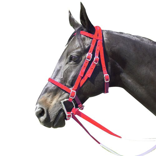 Intrepid International Nylon Race Horse Bridle, Red
