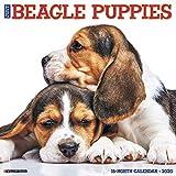 Just Beagle Puppies 2020 Calendar
