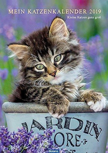 Mein Katzenkalender 2019: Kleine Katzen ganz groß