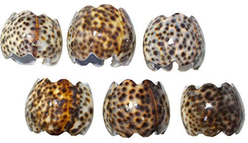 U.S. Shell Tiger Cowrie Napkin Ring, -