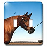 3dRose TDSwhite – Horse Equine Photos - Arabian Show Horse Pasture - Light Switch Covers - double toggle switch (lsp_285453_2)