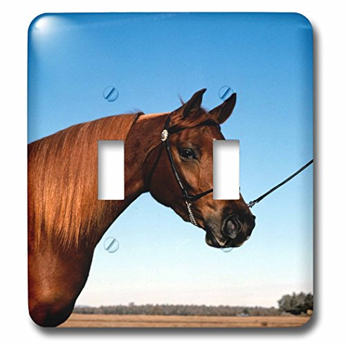 3dRose TDSwhite – Horse Equine Photos - Arabian Show Horse Pasture - Light Switch Covers - double toggle switch (lsp_285453_2) by 3dRose