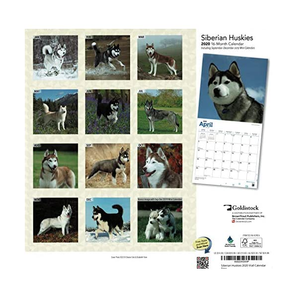 """Goldistock 2020 Large Wall Calendar -""""Siberian Huskies"""" - 12"""" x 24"""" (Open) - Thick & Sturdy Paper - - Fun-Loving and Outgoing Dogs 3"""