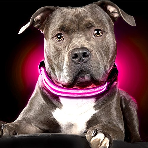 Ultimate LED Dog Collar Rechargeable