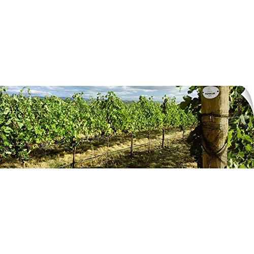 CANVAS ON DEMAND Charles Blakeslee Wall Peel Wall Art Print Entitled Vineyard of Mature Merlot Wine Grapes Ready for Harvest with Bird Netting ()