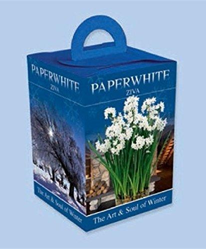 Amazon Paperwhite Gift Boxes Fragrant Snow White Flowers