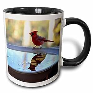 3dRose Danita Delimont - Trish Drury - Squirrels - USA, Tennessee, Athens. Bird bath. Eastern Gray Squirrel. - 11oz Two-Tone Black Mug (mug_192055_4)